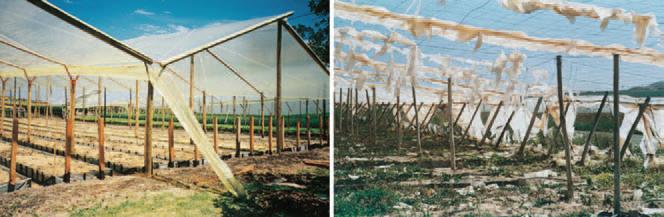 شکل-4) تصویر سمت چپ پوشش گلخانه ای نصب شده و تصویر سمت راست، پوشش پس از دو سال استفاده.