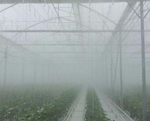 برطرف کردن مه گرفتگی در گلخانه ها به کمک افزودنی آنتی فاگ