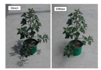 فیلتر نور ورودی به گلخانه به کمک پوشش گلخانه