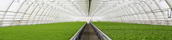 اصلاح کننده فیلم کشاورزی Agricultural Film Modifier